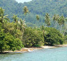 The rainforest which comes right to the water on Pulau Tioman.