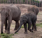 Some of the Kuala Gandah Elephant Reserve's inhabitants.