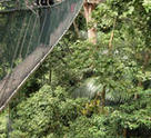 One of Forest Research Institute Malaysia's many rope bridges.