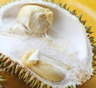 Fresh open durian fruit fresh tropical exotic