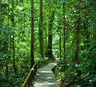 A path through Gunung Mulu National Park.